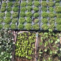 Vor den Vorhang: Im Biogarten fairwurzelt sprießt Hoffnung